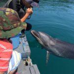 「高知県/遊び場」イルカと一緒に泳げる!室戸ドルフィンセンター
