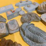 【北海道/帯広市】足寄動物化石博物館で「化石掘り&レプリカ作り」